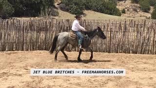 SOLD - Jet Blue Britches - Freeman Ranch