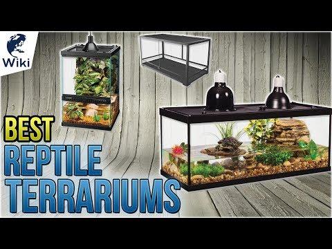 10-best-reptile-terrariums-2018