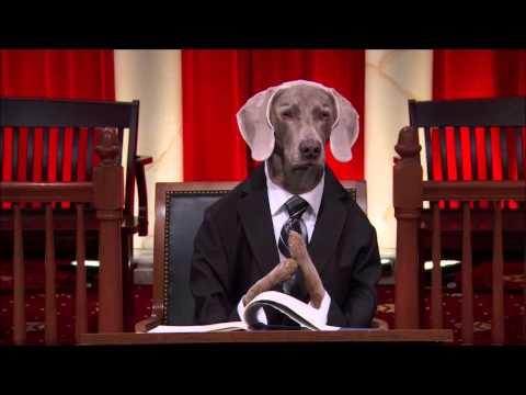Republic of Argentina v. NML Capital Ltd. #RealAnimalsFakePaws #PuppyJustice