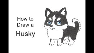 How to Draw a Dog (Cartoon Husky)
