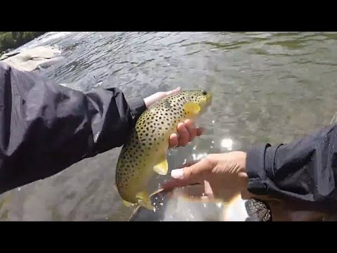 Fly Fishing For Brown Trout Winooski River Bolton Falls Vermont