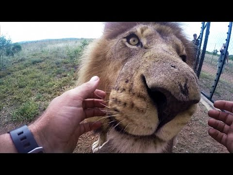 GoPro: Wild Animal Dental Surgery with Kevin Richardson