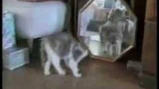 動物おもしろムービー*ネコハプニング集 thumbnail