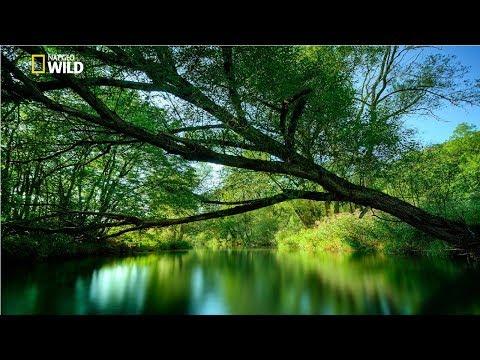 National Geographic Documentary | Thailand Nature and Wildlife | BBC Wildlife Animal
