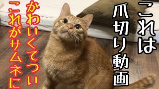 猫の爪切り動画なのにその後の方がかわいい動画w