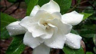 Al Bowlly - A Little White Gardenia