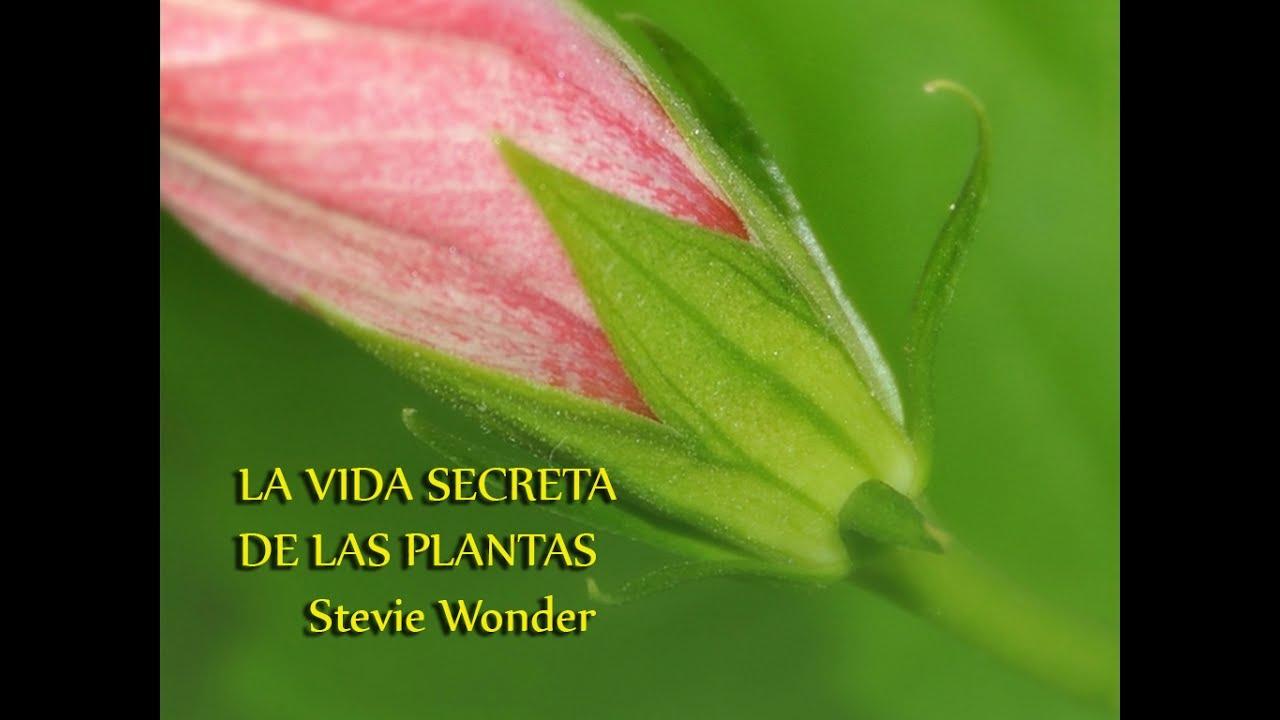 La Vida Secreta De Las Plantas Stevie Wonder Youtube