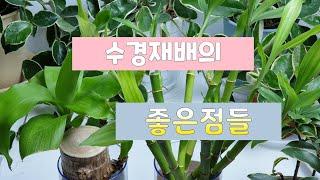 #수경재배의 좋은점_공기정화_천연가습_심신안정_시각효과