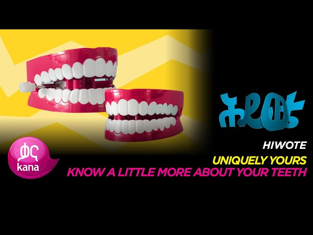 Know a Little More about your Teeth |Hiwote