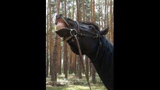 Клип. Лошади. Конюшня.