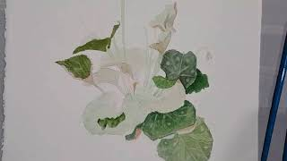 How to paint a realistic Cyclamen in watercolour with Nehad Bekhit