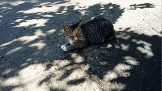 Kucing lucu 😺 hewan lucu, funny cat 😸 funny animal