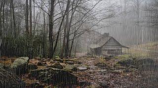 Расслабляющий дождь и гроза в туманном лесу - звуки дождя и грома для сна