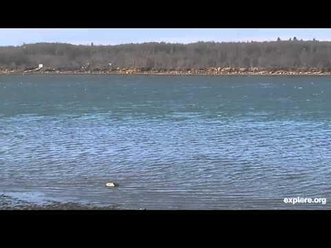 High Tide Coming In King Salmaon Alaska 2014 04 22 11 23 30