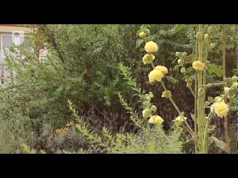 Garden space: Design for dementia care (4/7)
