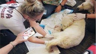 Собака одной из пассажирок начала рожать в зале аэропорта. Вот как отреагировали работники