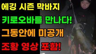 무늬오징어 에깅 시즌 막바지 키로오바를 만나다! (미공…