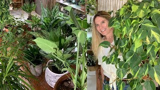 30 EASY CARE INDOOR PLANTS I CAN'T LIVE WITHOUT!