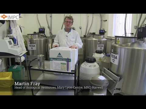 Shipment and storage of mouse sperm on dry ice | Martin Fray