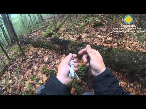 Ovenbird Pinpoint-GPS Tracker Retrieval: Smithsonian Migratory Bird Center