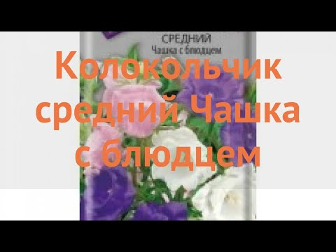 Колокольчик средний Чашка с блюдцем �� обзор: как сажать, семена колокольчика Чашка с блюдцем