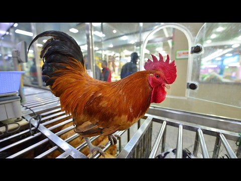Poultry markets closed in China to control spread of H7N9