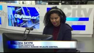 City TV news 2 17 17
