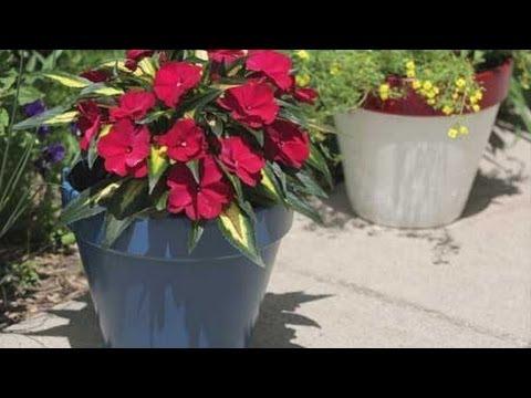 Painted Flower Pots Garden Craft