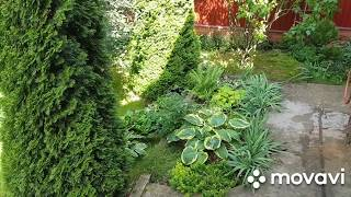 Астильба для клумбы в тенистом уголке сада