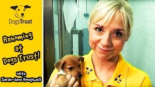 Sarah-jane Honeywell Explains Rehoming At Dogs Trust