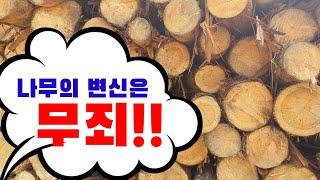 #나무의 #변신 #추석…