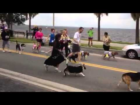 Dash For Dogs 2012