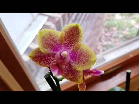 November Orchid Collection Tour: Blooms, Spikes, Roots.  Special guest: Crazy Bird