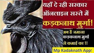 कड़कनाथ मुर्गी कहा मिलेगी | Kadaknath Murga Price | online खरीदें कड़कनाथ मुर्गा | mp kadaknath app