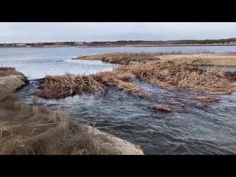 Raw Video: Miacomet Pond on Nantucket Island Opened to Ocean