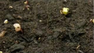 LOVE SEX GOD film teaser (2 part documentary)