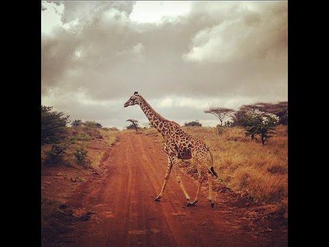 [Journey to Kampala & Nairobi] Holiday from DR Congo