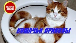 КОШАЧЬИ ПРИКОЛЫ !!! ★★★ CAT JOKES !!!