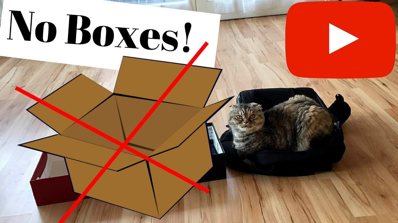 Big Cat Like Boxes Too
