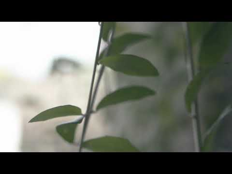 Putri Fe - Salah Sendiri (official video clip)