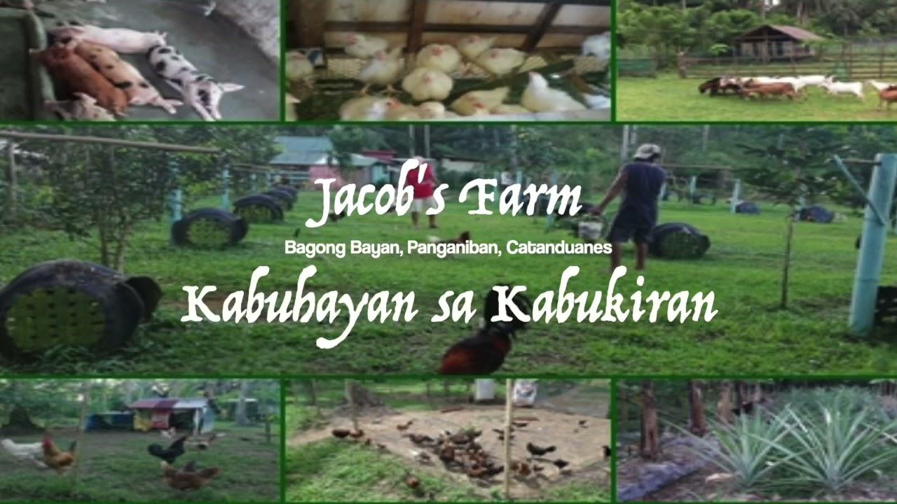 Download Kabuhayan sa kabukiran. (Integrated farming)