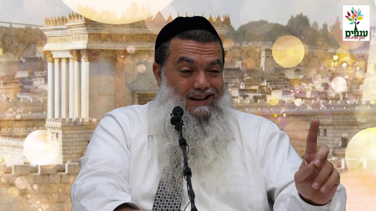 הרב יגאל כהן - קצרים | תאהבו שלום ותרדפו אחר השלום!