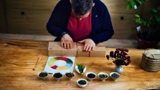 Новый Гу Шу пуэр. Свежий чай 2018. Котонабор. Антикварная керамика и цзиндэчжэньский фарфор
