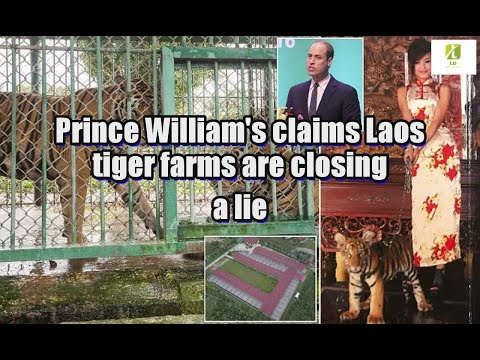 Prince William's claims Laos tiger farms are closing a lie