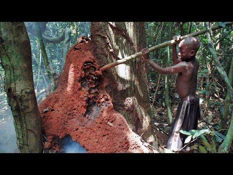 Baka Pygmies - Termite gathering and cooking