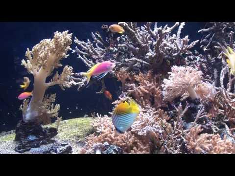 Oceanographic Museum Monaco 1080p HD