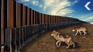 U.S./Mexico Border Wall Puts Animals In Danger Of Extinction