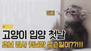 고양이 입양 첫날 브이로그, 초보집사 첫날밤 무슨일이?!