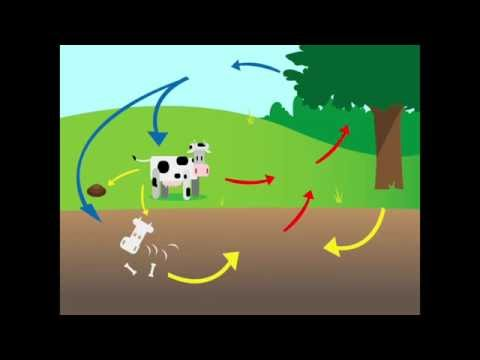 CC Cycle 2, Carbon And Oxygen Cycle
