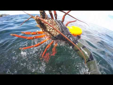 Easter Spearfishing in NZ - Great Barrier Island